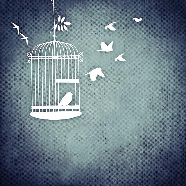 bird-730478_640